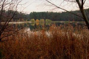 Парк Партизанской Славы: не обязательно ехать за город, чтобы погулять в лесу